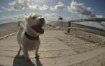 Kleine-Runde-mit-Hund-durch-Pelzerhaken (12)