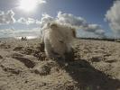 Kleine-Runde-mit-Hund-durch-Pelzerhaken (13)