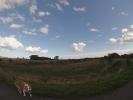 Kleine-Runde-mit-Hund-durch-Pelzerhaken (32)